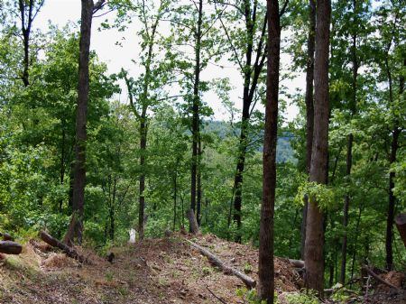 Rock Springs - Lot 25 : Keith Springs : Franklin County : Tennessee