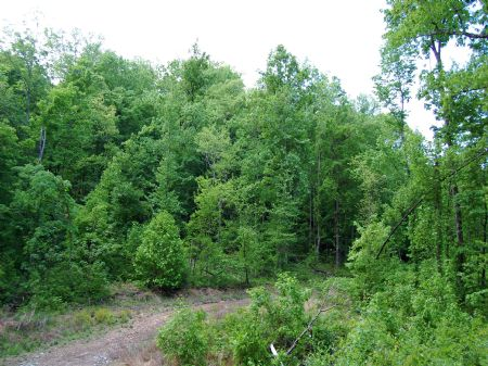 Rock Springs - Lot 27 : Keith Springs : Franklin County : Tennessee