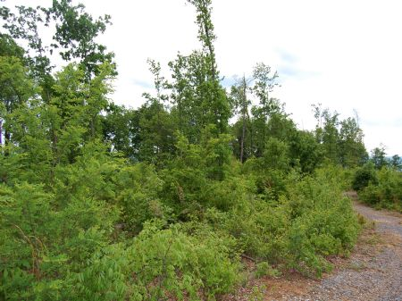 Rock Springs - Lot 30 : Keith Springs : Franklin County : Tennessee