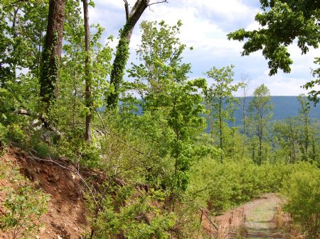 Rock Springs - Lot 31 : Keith Springs : Franklin County : Tennessee