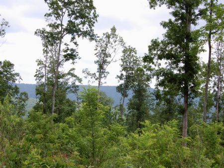 Iron Gap Road - Lot 6 : Keith Springs : Franklin County : Tennessee