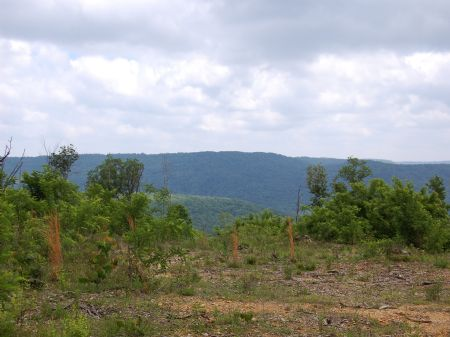 Iron Gap Road - Lot 7 : Keith Springs : Franklin County : Tennessee