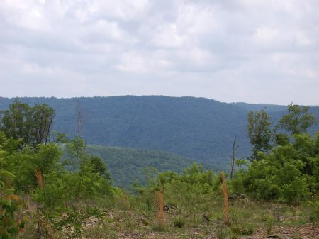 Iron Gap Road - Lot 8 : Keith Springs : Franklin County : Tennessee