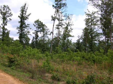 Iron Gap Road - Lot 9 : Keith Springs : Franklin County : Tennessee