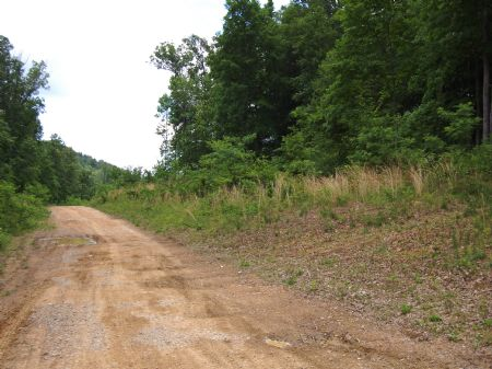 Iron Gap Road - Lot 11 : Keith Springs : Franklin County : Tennessee