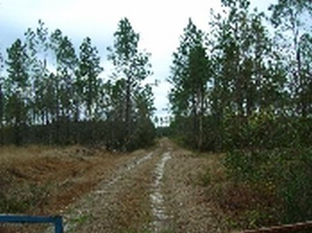 207 Acres-lot 6 Tall Pines S/d : Starke : Bradford County : Florida