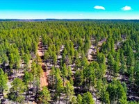Wooded Land Near National Forest : Fort Wingate : Cibola County : New Mexico