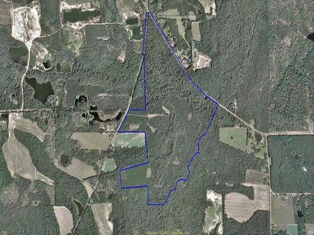 365 Acre Sportsman Paradise : Meigs : Thomas County : Georgia
