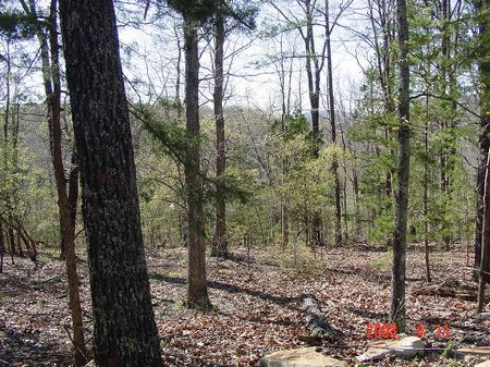 120 Acres On The Sylamore Creek : Mountain View : Stone County : Arkansas