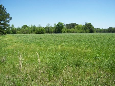 17 Acre Homesite Or Minifarm : Tarheel : Bladen County : North Carolina