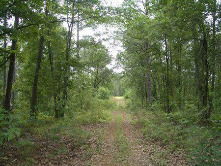 297 Acres On Turkey Mountain : Rome : Floyd County : Georgia