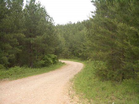 616 Acres Mix Of Hardwoods/pines : Ranger : Gordon County : Georgia