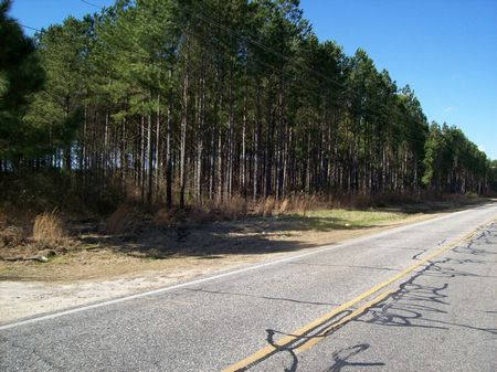 Timber Investment Development Tract : Rennert : Robeson County : North Carolina