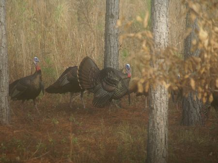 Hunters' Country Club : Hawkinsville : Pulaski County : Georgia