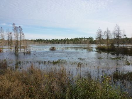 Glendale Tract : North Of Defuniak Springs : Walton County : Florida