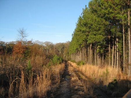 Yemassee South Tract : Hampton : Hampton County : South Carolina