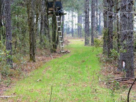 Ham Pond : Sneads : Jackson County : Florida