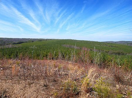 266 Acres On Signal Mountain : Signal Mountain : Sequatchie County : Tennessee