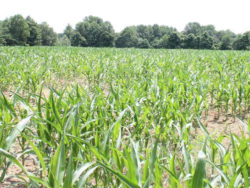 cero Comienzo Bajo  Kentucky Timberland Farms for Sale, Timberland Farmland for Sale : FARMFLIP