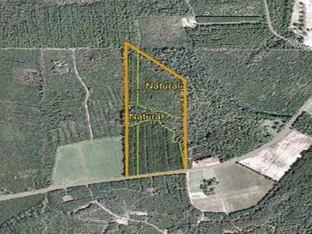 38 Acres - C. T.  Echols : Patterson : Pierce County : Georgia