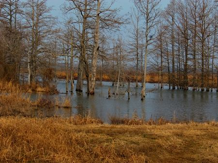 616 Acres Of Duck And Deer Hunting : Elaine : Phillips County : Arkansas