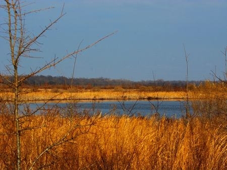 497 Acres Of Duck And Deer Hunting : Elaine : Phillips County : Arkansas