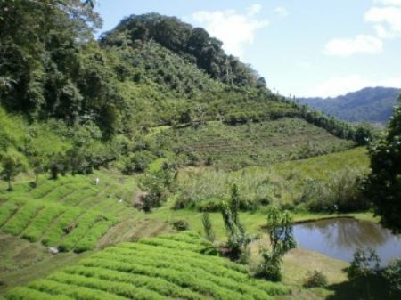 Mountain Farm Pasture & Ponds : Orosi : Costa Rica