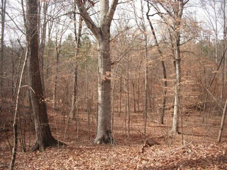 Beautiful Hardwoods And Creek : Monticello : Jasper County : Georgia