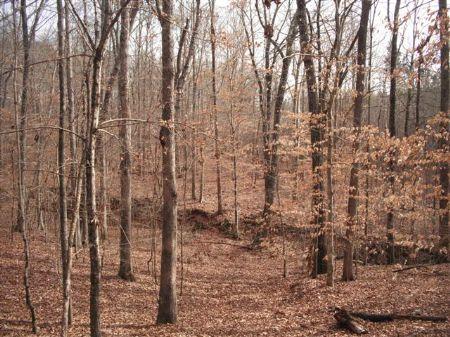 25.7 Acres Homesite Or Hunting Land : Monticello : Jasper County : Georgia