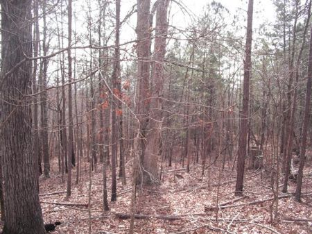 47.5 Acres Beautiful Hunting Land : Monticello : Jasper County : Georgia