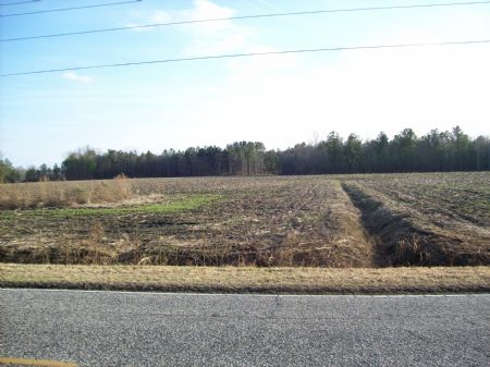 Beautiful Farm With Timber : Lumberton : Robeson County : North Carolina