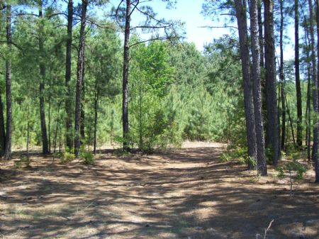 83 Acre Farm With Timber : Tar Heel : Bladen County : North Carolina