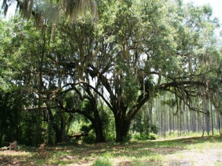 Warren Farm : Madison : Madison County : Florida