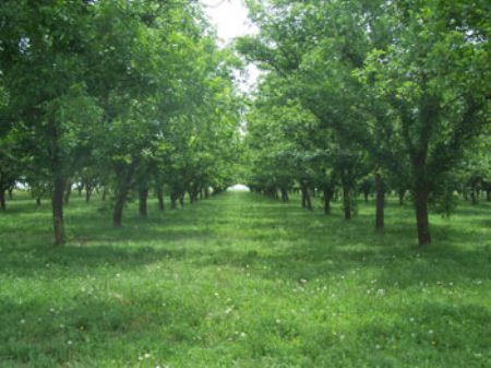 600 Pecan Tree Orchard And Home Farm For Sale Anton Hockley