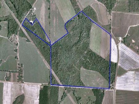 217 Acre Recreational Farm : Barney : Brooks County : Georgia