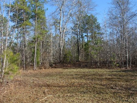 37 Acres : Rockford : Coosa County : Alabama