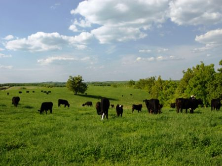 1360 +/- Acre Cattle Ranch : Marshall : Searcy County : Arkansas