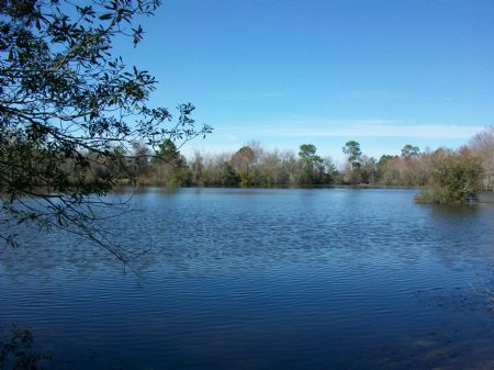 Pasture And 5 Acre Lake On 99 Acres : Rochelle : Wilcox County : Georgia