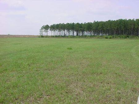 320ac.with Beautiful Views & Timber : Opp / Elba : Covington County : Alabama
