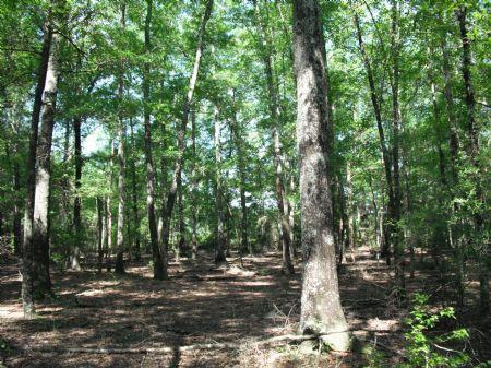 Qdm Hunting Property Or Minifarm : Marshallville : Macon County : Georgia
