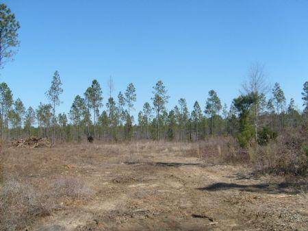 Mossy Creek Tract : Dawson : Terrell County : Georgia