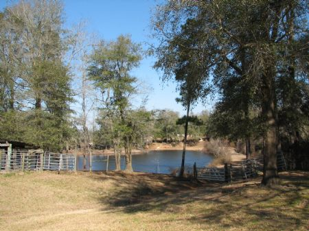 Shearhose Landing : Brooklet : Bulloch County : Georgia