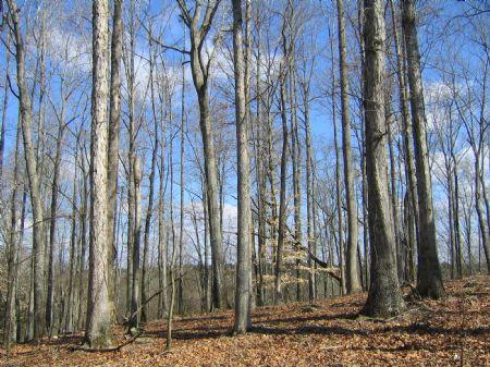 Grove Creek Tract : Lexington : Oglethorpe County : Georgia