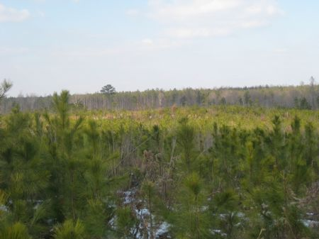 327 Acres Timberland : Indian Neck : Essex County : Virginia