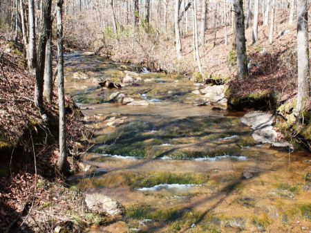 Country Land Auction : Woodland : Randolph County : Alabama