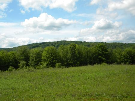 30 Acres Mineral Rights Near Forest : Beaver Dams : Schuyler County : New York