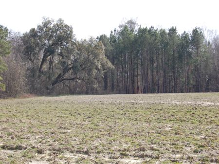 Moore Farm : Cairo : Grady County : Georgia