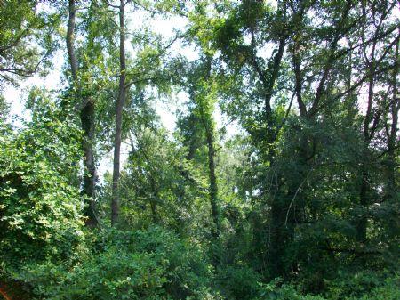 110 Acres Hunting Camp : Hawkinsville : Pulaski County : Georgia