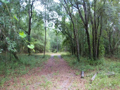 65.89 Acres-Lot 7 Oak Hill : Trenton : Gilchrist County : Florida