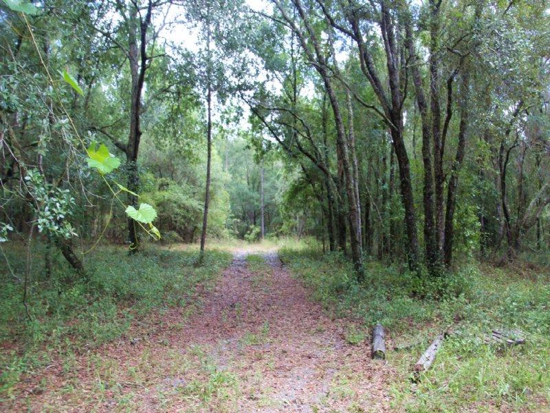 65.89 Acres-Lot 7 Oak Hill : Trenton : Gilchrist County : Florida